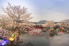 东湖樱花园之夜