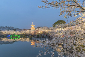东湖樱园夜色