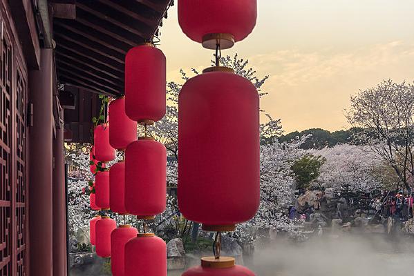 樱花盛开喜洋洋
