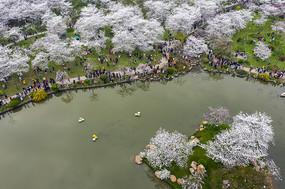 俯瞰东湖樱花园
