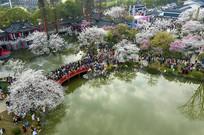 俯瞰东湖樱花园虹桥