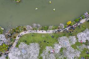 俯瞰东湖樱园