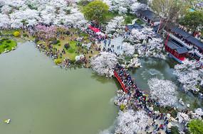 鸟瞰东湖樱花园虹桥