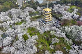 鸟瞰东湖樱花园五重塔