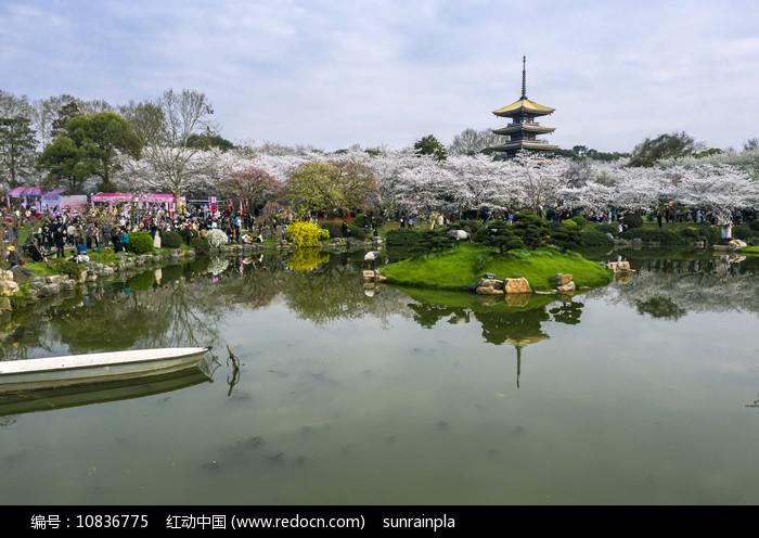 东湖樱花园一角图片