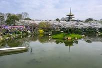东湖樱花园一角