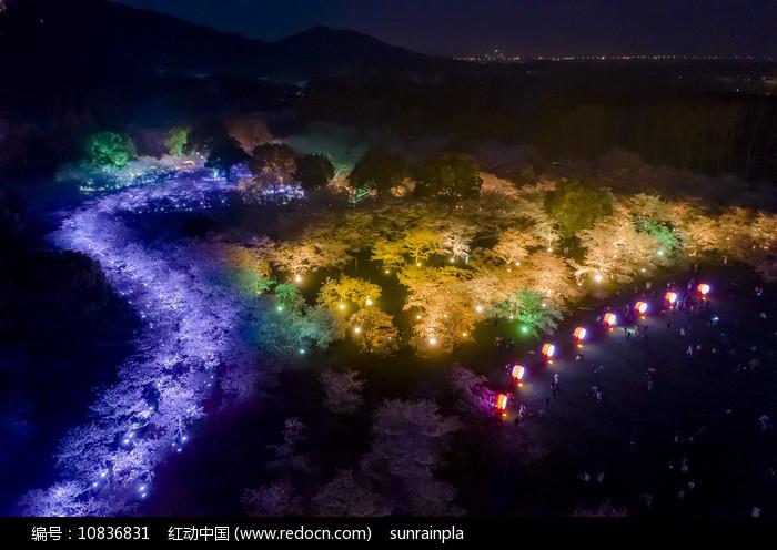 俯拍东湖樱园夜色图片