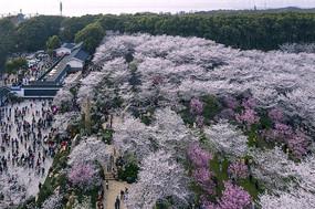 俯瞰樱花园广场