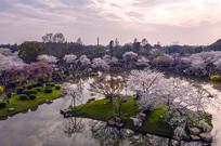 夕阳洒满樱花岛