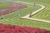 成都紫颐香薰山谷园林景观