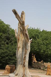 硅化树树干