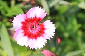 一朵粉红的小花