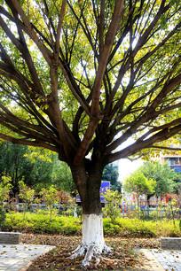 一棵苍天绿色大树