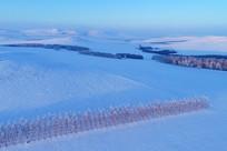 航拍内蒙古雪域农田防护林