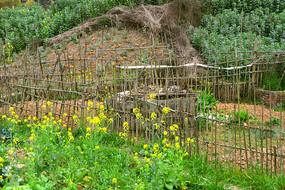 乡村田园-竹篱笆菜地