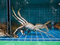 在水中活动的大闸蟹