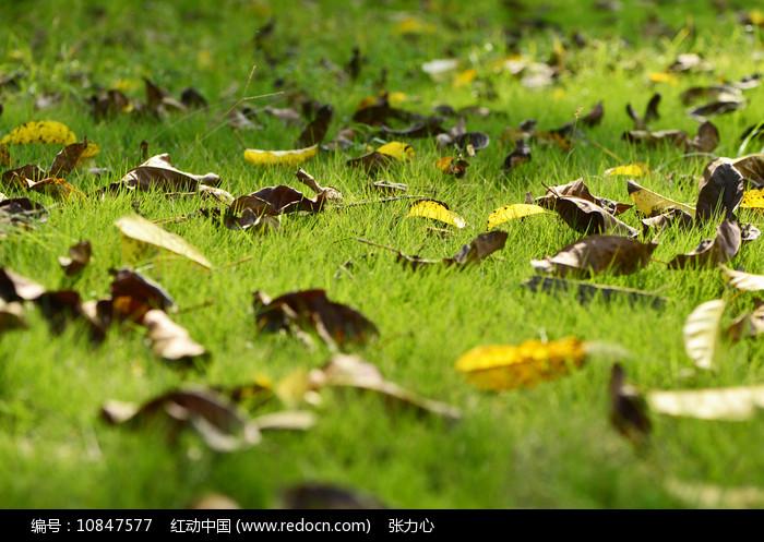 草地上的落叶图片