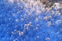 大兴安岭雪原山林晨光