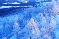 林海雪原雪林