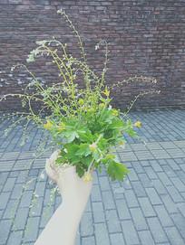 手握着野花