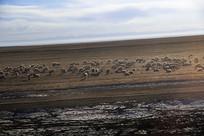 高原湖边羊群