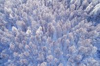 航拍冬季雪原密林