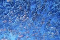 航拍林海雪原松林暮色风景