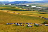 呼伦贝尔草原牧场羊群