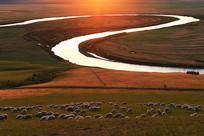 呼伦贝尔河岸牧场羊群暮色