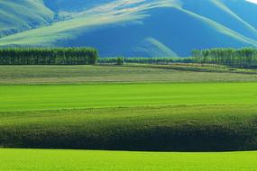 呼伦贝尔绿色的田野