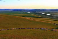 呼伦贝尔牧场羊群