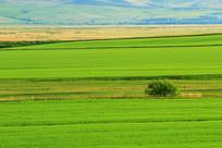 呼伦贝尔农垦田野风景