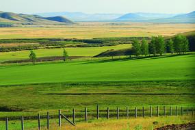 农垦田野风景