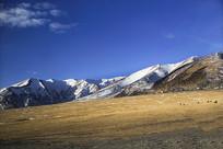 雪域牧场高原