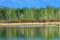 大兴安岭湖岸白桦林山水风光