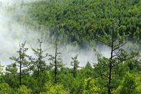 大兴安岭绿色树林晨雾