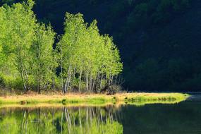 大兴安岭森林湖泊景观