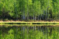 大兴安岭森林湖岸密林