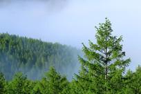 大兴安岭森林林云海风景