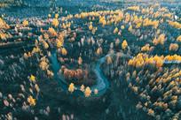 航拍大兴安岭秋季密林
