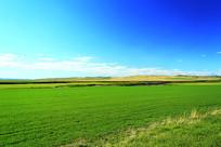 农田农作物风景