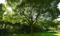树林的一棵大树