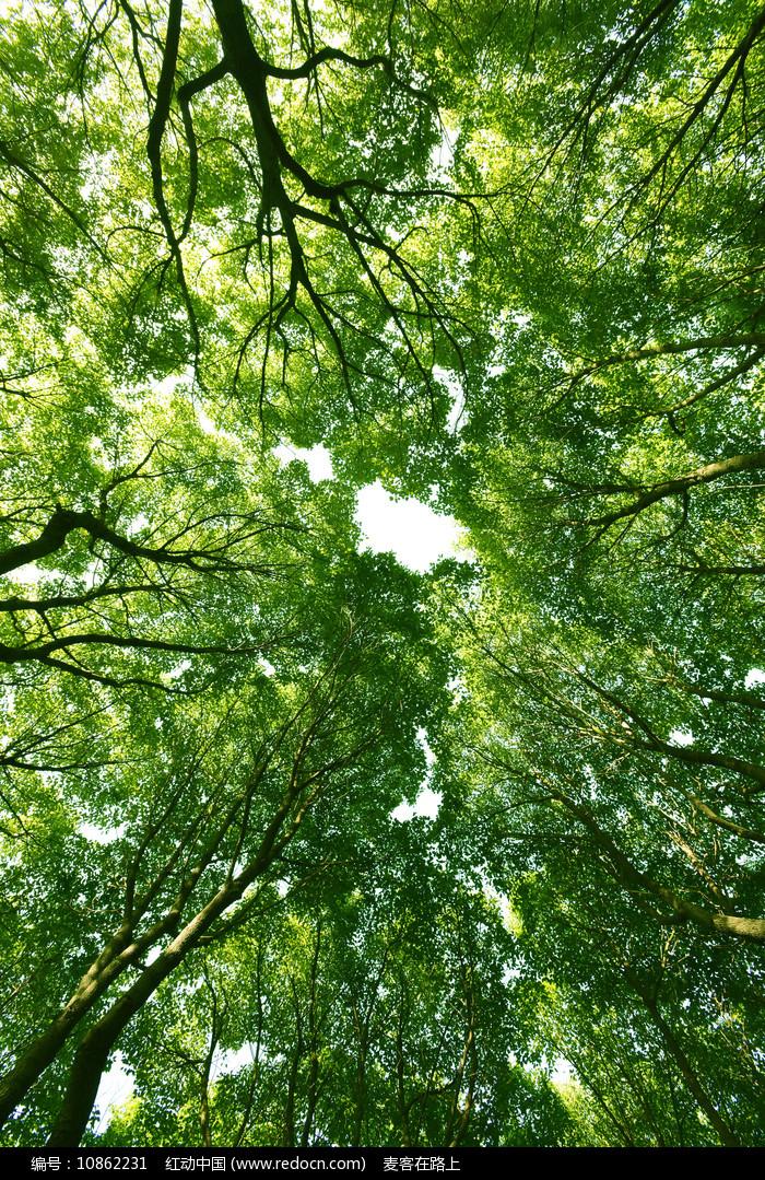 仰拍的绿色森林图片