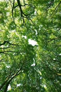仰拍的绿色森林