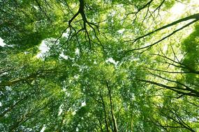 仰拍的绿色树林