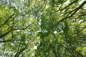 仰拍的绿色树林风光