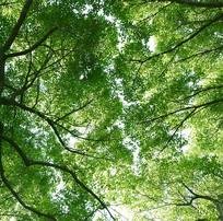 仰拍的树冠