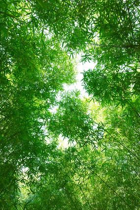 仰拍的竹林风景