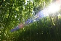 照进竹林的阳光