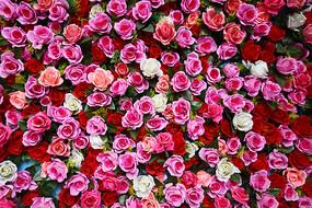 满屏的仿真玫瑰花